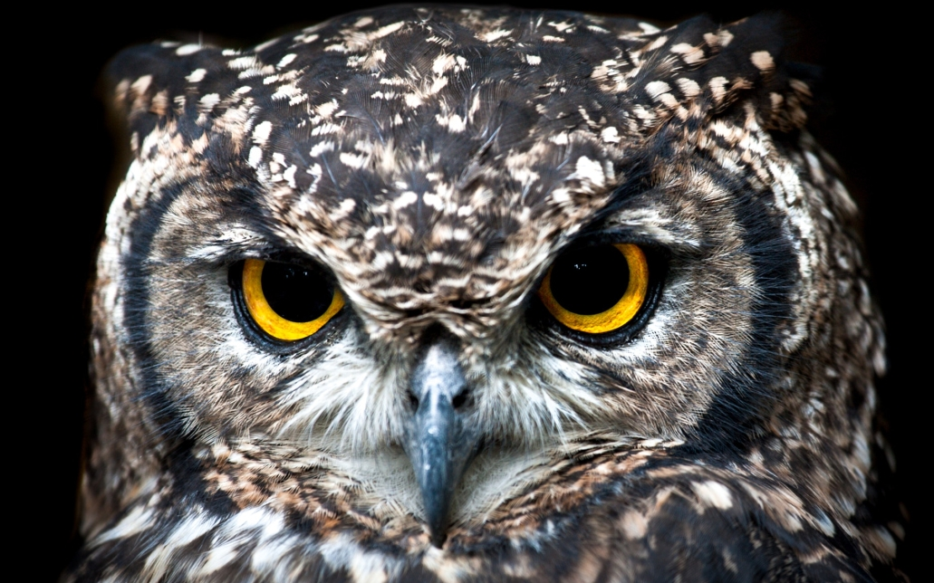 What is this life if, full of care. a poem by WH Davis showing an owl